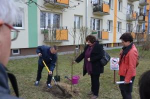 Cała Polska sadzi drzewa - Stalowa Wola